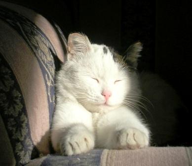 Padma -- In Sunbeam -- WS