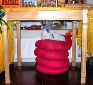 Padma -- On Cushions -- WS