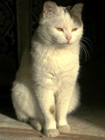 Padma in Sunbeam -- Sitting -- WS