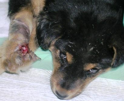UB -- Injured Puppy -- WS