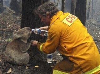 Koala Aid