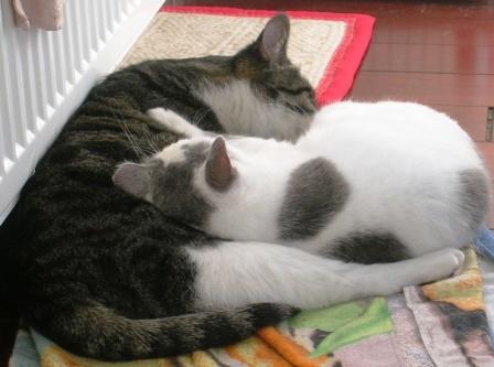 UB -- Yin Yang Kitties -- WS