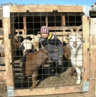 Mongolia -- Tsagaan Sar 2009 -- Boy in Goat Pen -- WS