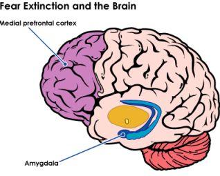 Brain Fear