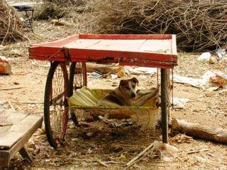 India 2009 -- Dog In Shade -- WS