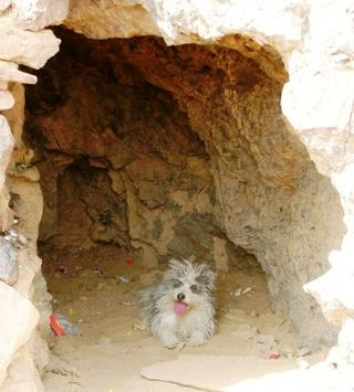 Mongolia -- SIT Gobi Trip -- Dog in Cave -- WS