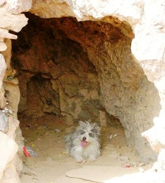 Mongolia -- SIT Gobi Trip -- Dog in Cave -- WS