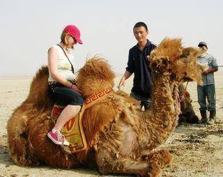 Mongolia -- SIT Gobi Trip -- Camel 1 -- WS