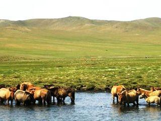 Mongolia -- Gun Galuut -- Horses and Cranes -- WS
