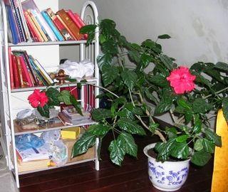 Dharma Bloom -- WS