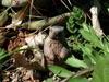 Marmot_n_cactus