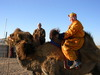 Me_pasang_camels_3