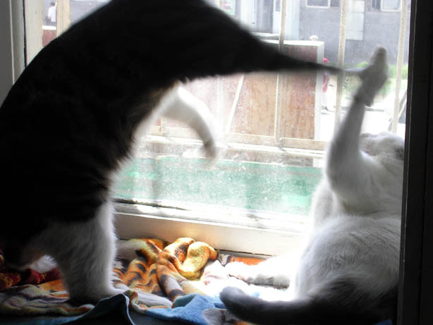Mooj_and_nita_fighting_on_windows_2