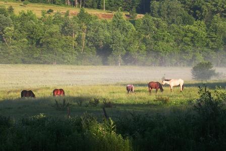 America_trip_palyul_ling_horses_in_
