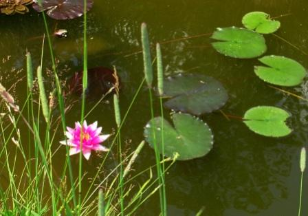 America_trip_palyul_ling_lotus_at_s