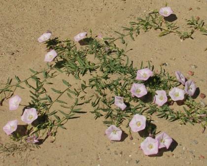 Dornogov_khamar_wildflowers_1_ws