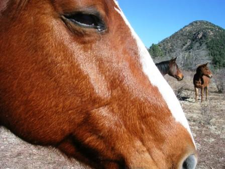 Dakini_valley_critters_horses_and_m