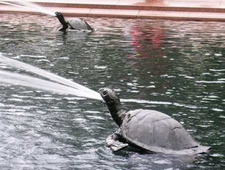 Australia_sydney_spewing_turtles_ws