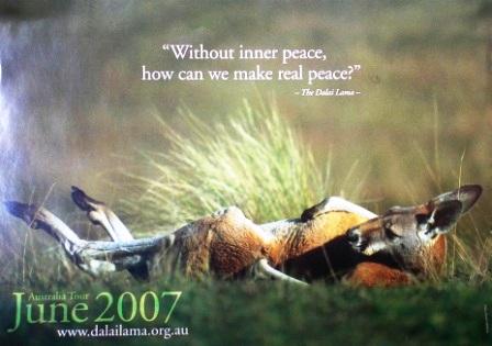 Australia_inner_peace_kangaroo_flye