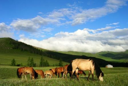 Hamids_camp_morning_horses_web_size