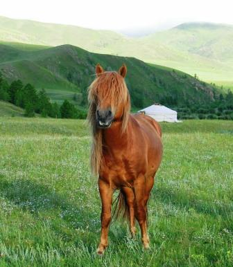 Hamids_camp_shaggy_horse_wide_web_size