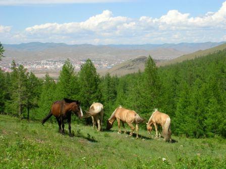 Horses_and_ub
