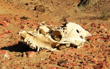 Khamar_cave_retreat_skull_neighbor_web_s