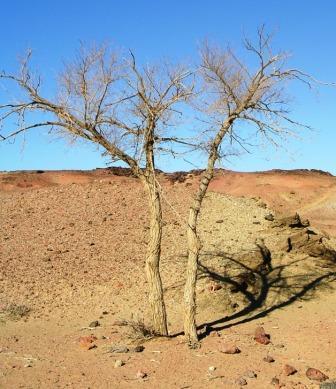 Khamar_cave_retreat_the_tree_web_size
