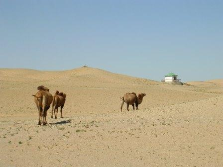 Kk_camels_and_spring_house