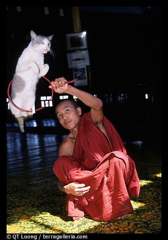 Monk_and_cat