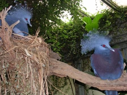 The_zoo_blue_birds